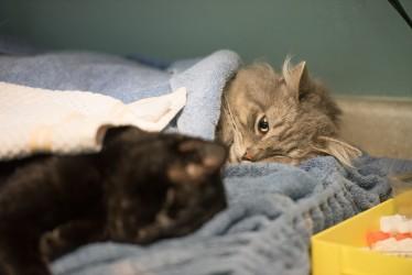 Kitten Recovery-6915