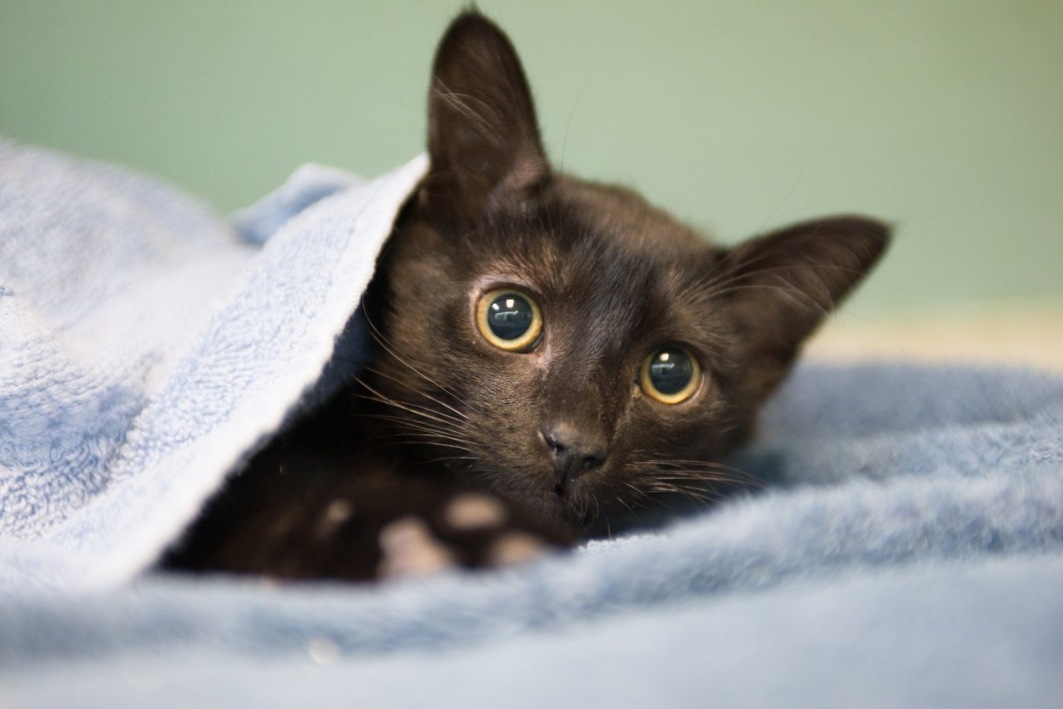 Kitty Recovery-7061